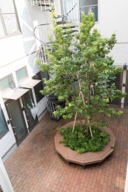 木を囲む中庭がこの物件の特徴。