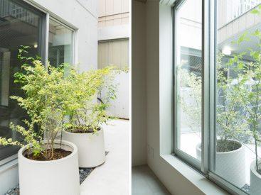 1階であるためプライバシーを考慮した目隠しの植栽が配置されています。