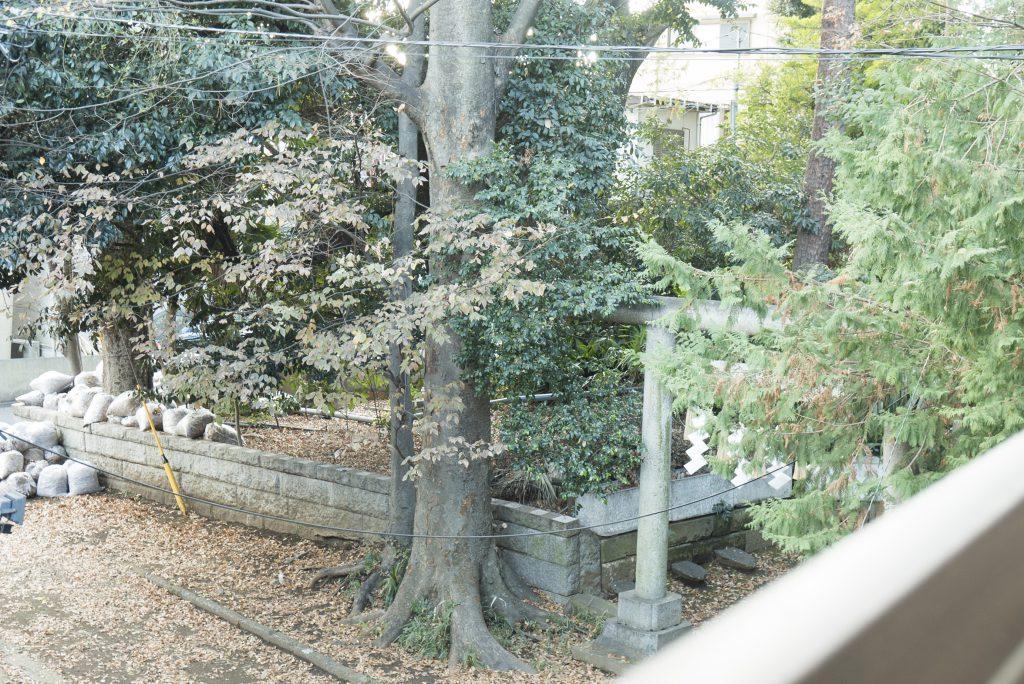 窓の先には鳥がよく止まる木々が。日当たりのいいのでののんびりしてね。