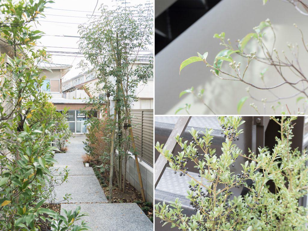 敷地全体、植栽ゆたか。さまざまな種類の植物たちが四季を楽しませてくれる。
