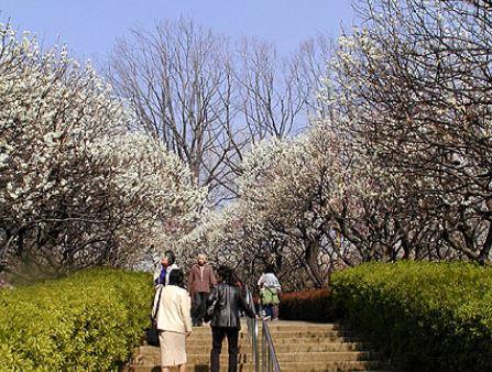お散歩は羽根木公園かな