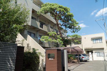 建物外観。赤松がシンボルツリーになっています。