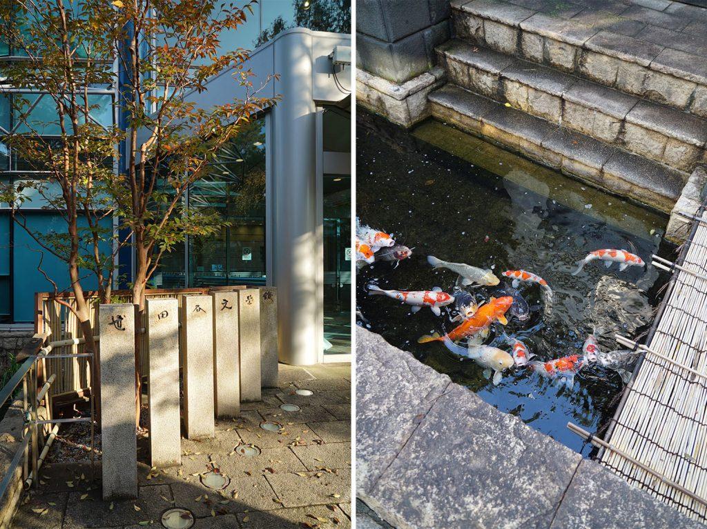 世田谷文学館にはたくさん鯉もいます