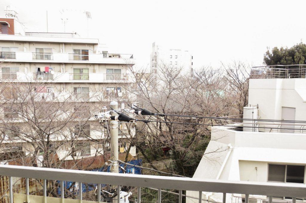 バルコニーから桜並木!